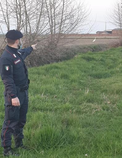 Cattura un airone bianco maggiore sulle sponde di un laghetto: nei guai un 29enne di origini romene