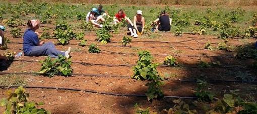 Agricoltura, accordo regionale tra i sindacati e Synergie Italia per 600 lavoratori in somministrazione