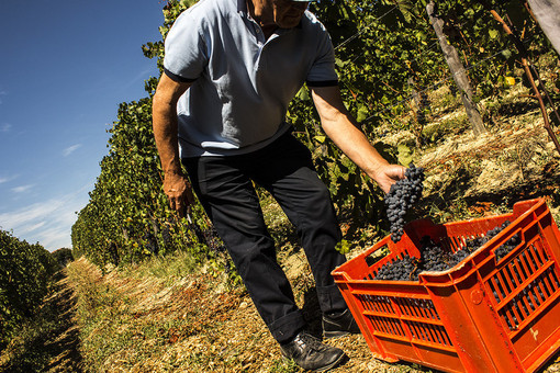 """Emersione del lavoro nero, Liguria """"maglia nera"""" tra le regioni del Nord Ovest, ma il Piemonte è poco distante"""