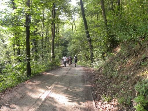 Il bosco del Vaj