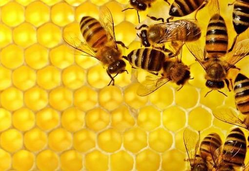 Le api rischiano di scomparire: adottare un alveare per ripartire in modo green