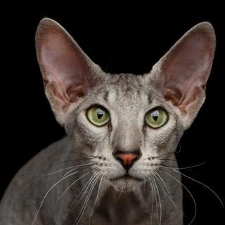 Petsfestival 2021: il gatto è sempre più protagonista