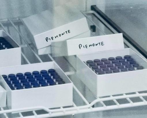 Fiale vaccino Covid