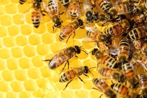 alveare di api
