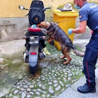 Jackie trova hashish e marijuana nascosta nello scooter, Carabinieri in azione contro spaccio di droga