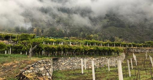 """Nasce la rubrica """"Itinerari - strada dei vigneti alpini"""": il vino eccellente che arriva dalla montagna"""