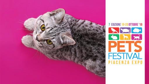 I gatti più belli in mostra a Petsfestival