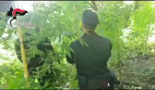 Due piantagioni di cannabis scoperte dai carabinieri: 4 persone arrestate