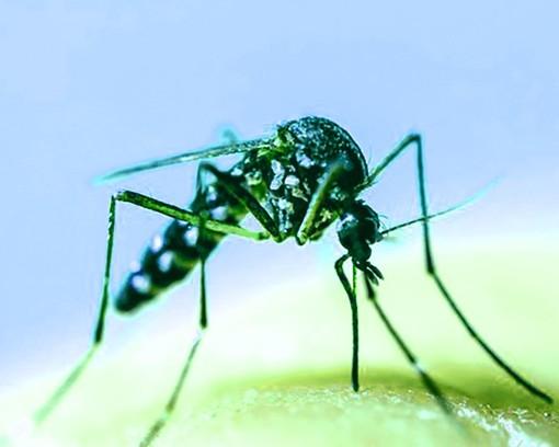 E' ricominciata la lotta alle zanzare su tutto il territorio di Chivasso